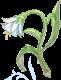 Fantasy Flower Image
