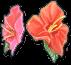 Hibiscus Blueprint Image