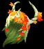 Maple Colored Phantom [1] Image