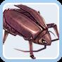 Thief Bug Female Image